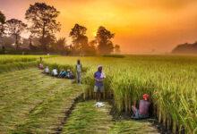 Photo of पीएम किसान योजना: आपकी 2000 रुपये की किस्त इस वजह से है लटकी