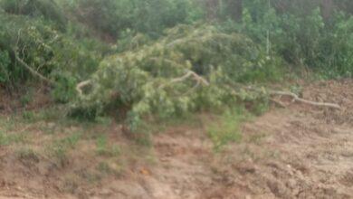 Photo of खेतों में जबरन हरे पेड़ों की अवैध कटान कर रहे दबंगों ने किसान के साथ कि मारपीट